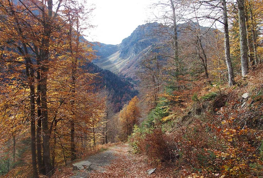Chemin d'accès aux cabanes