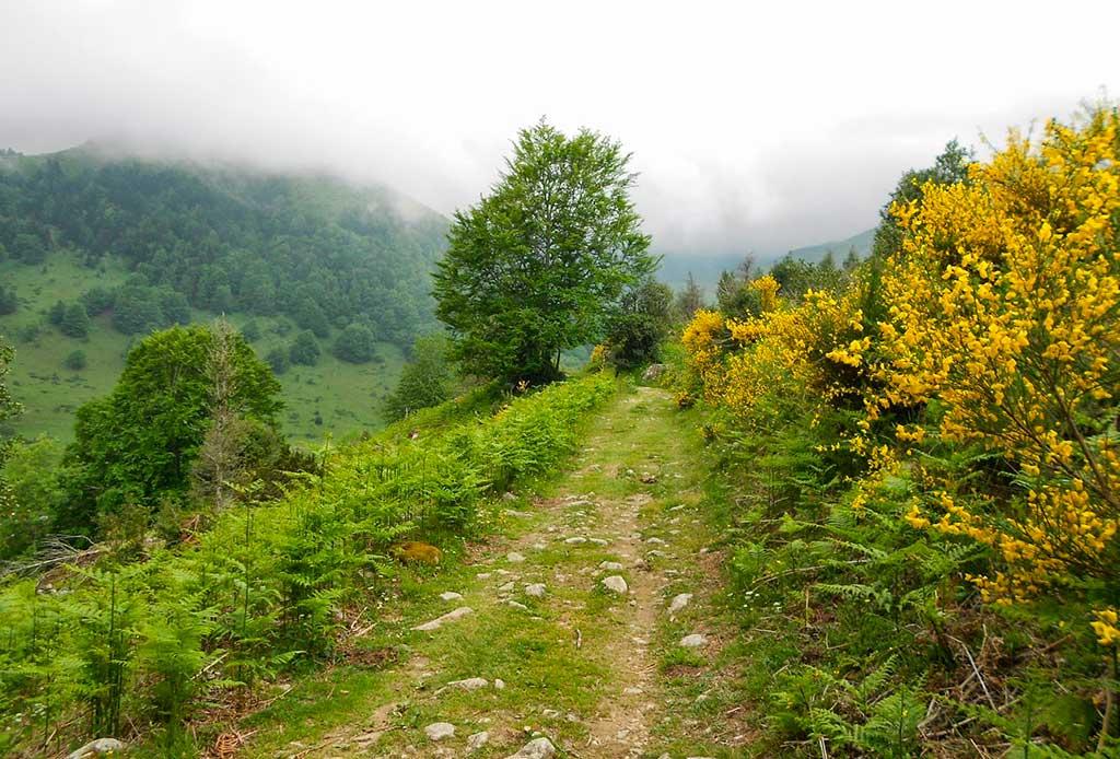 Chemin menant au Courtaou des Esclozes