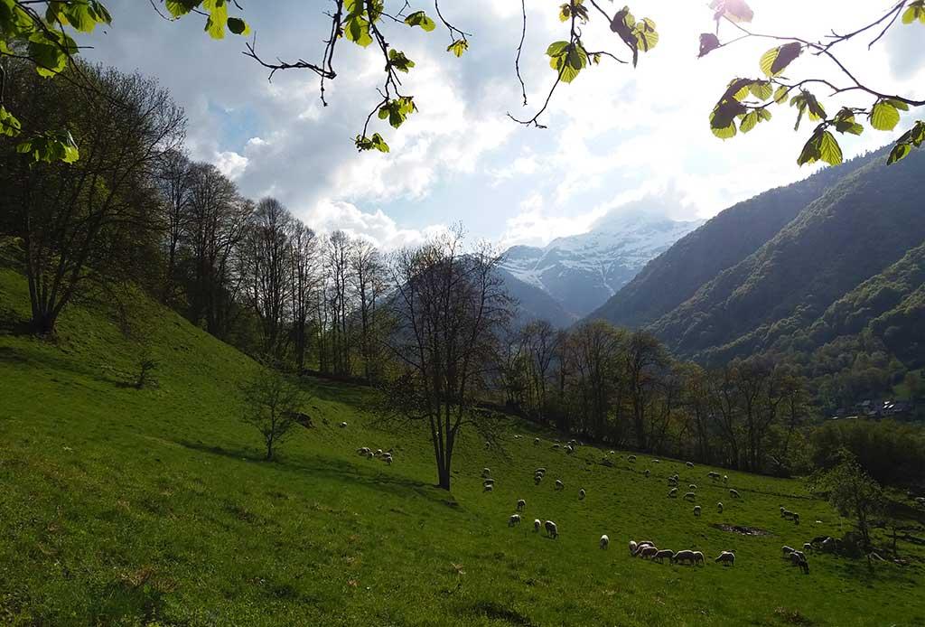 Les brebis dans la vallée